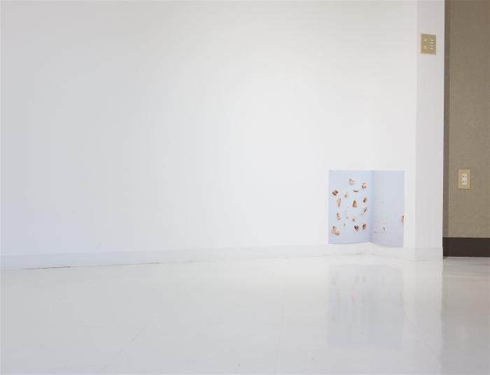 Dancing Fish Flakes (Disappointing Encore) /踊るカツオ節(がっかりアンコール) 2015 pigment prints, 48 x 33 cm