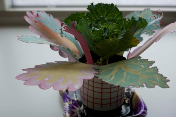 Ida Lawrence - The Plants in Hokkaido are weird, side 2015