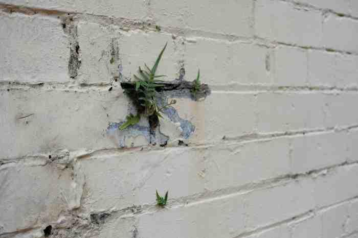 Ida Lawrence - Glebe Streetscape photo 20